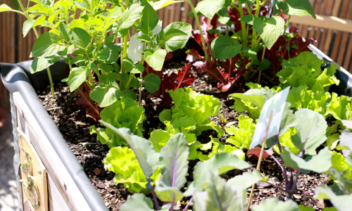 """Hledáme šikovného """"zahradníka"""" nebo """"zahradnici""""…"""